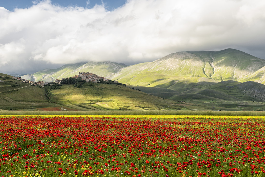 fioritura-castelluccio-di-norcia-2014-41